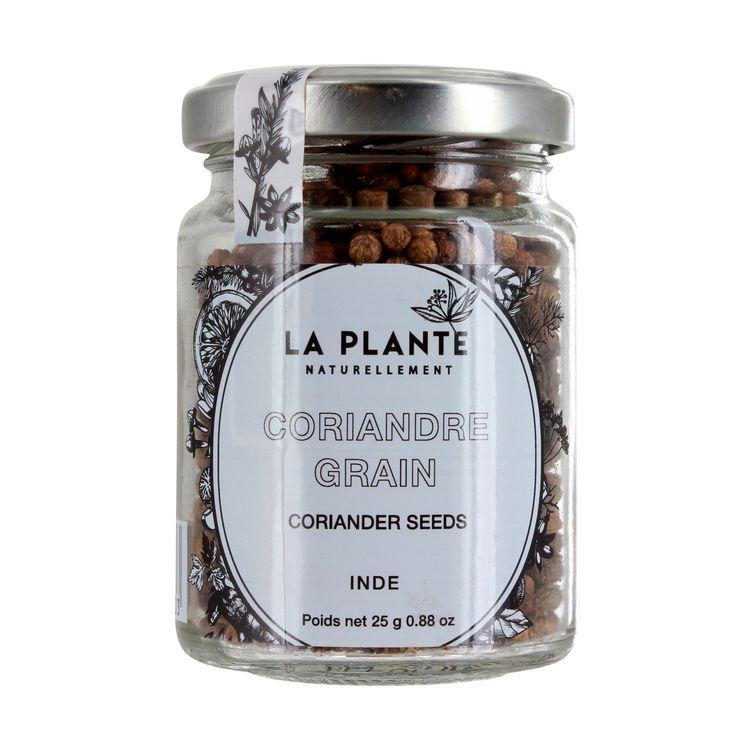 Coriandre BIO - La Plante